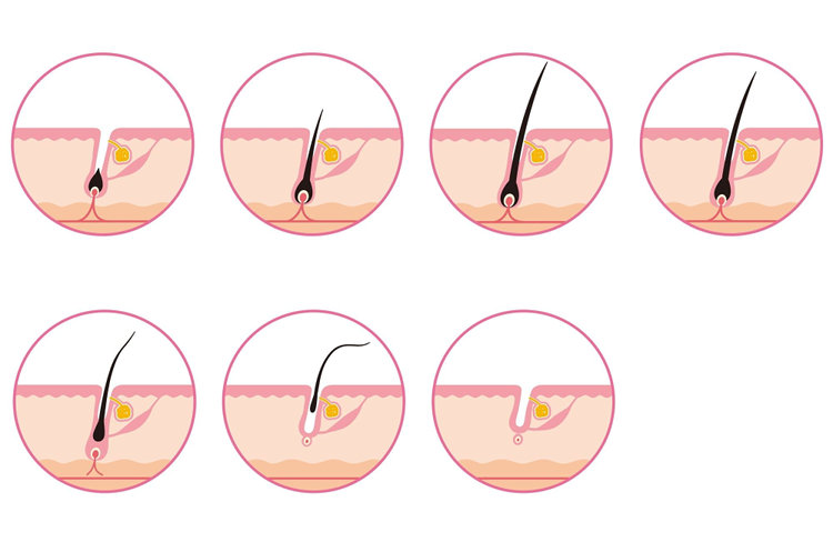発毛のサイクル